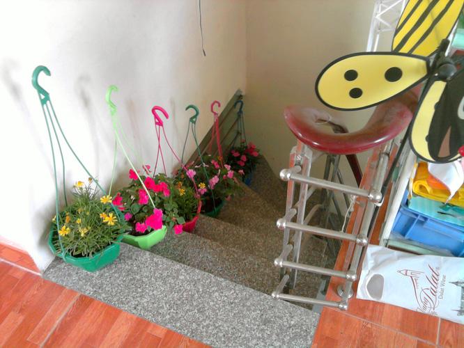 1 Bán chậu hoa treo ban công, trưng nhà : hoa phăng, cúc hương, ngọc thảo. Giá cả hợp lý.